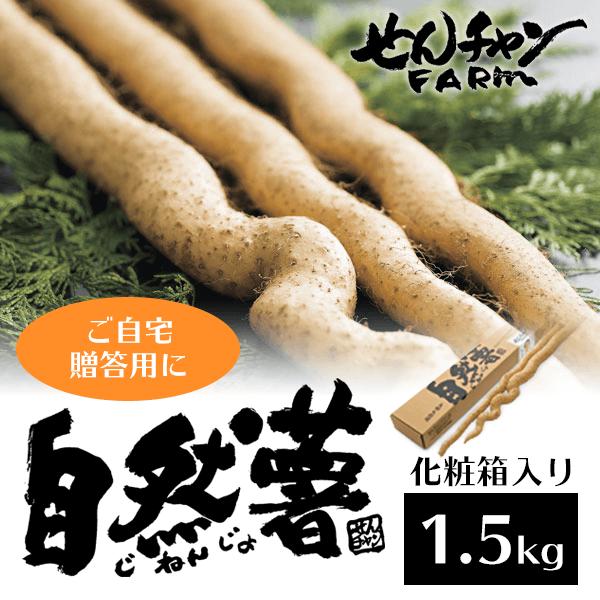せんチャンファーム 自然薯1.5キロ